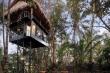 Khám phá khách sạn trên cây nằm giữa rừng Bali, Indonesia