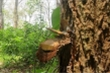 Bình Thuận: 'Bơm' thuốc độc vào Rừng Tà Cú để chiếm đất trồng thanh long