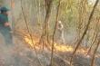 Cháy rừng phòng hộ, Chủ tịch Quảng Nam chỉ đạo 'nóng'