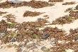 Đã thu gom hết dầu vón cục trên biển Đà Nẵng