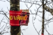 Video: Ngắm đào trồng Sơn La dán tem, bày bán trên phố Hà Nội