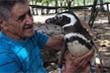 Xúc động chim cánh cụt bơi 8.000 km mỗi năm thăm ân nhân cứu mạng