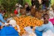Ảnh hưởng của dịch COVID-19, hàng ngàn tấn cam sành Hàm Yên chờ giải cứu