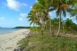 Đại gia tìm mua hoang đảo để tổ chức chơi game sinh tồn