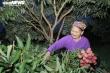 Nông dân Bắc Giang soi đèn thâu đêm thu hoạch vải thiều