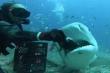 Video: Thót tim xem thợ lặn tay không đút thức ăn cho cá mập