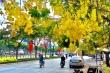 Sài Gòn đẹp nao lòng mùa hoa muồng hoàng yến vàng rực các tuyến phố