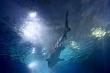 Cá mập Australia hung dữ chưa từng có trong 90 năm qua
