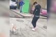 Clip: Chó 'trêu' người bằng cách nhại dáng đi cà nhắc