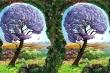 Trắc nghiệm vui đoán tính cách: Bạn thấy chim, cây hay người đầu tiên?