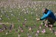Mỹ sắp chạm mốc 300.000 người chết vì COVID-19