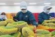 Bộ Công Thương đề nghị 'bật luồng xanh' với nông sản xuất khẩu