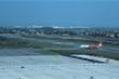 Trâu nhởn nhơ gặm cỏ trong sân bay Cát Bi