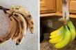 8 mẹo bảo quản thực phẩm không cần tủ lạnh