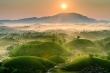 Ốc đảo chè ẩn hiện giữa biển mây: Cảnh sắc 'cực phẩm' chỉ có ở đất Tổ Phú Thọ