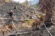Rừng Đắk Lắk liên tục bị tàn phá sau Tết
