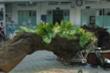 TP.HCM ban hành quy chế chăm sóc, quản lý cây xanh trong trường học