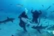 Video: Xem Mike Tyson đấu với đàn cá mập trắng