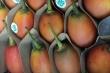 Cà chua lạ giá 1 triệu đồng/kg: Hàng hiếm xôn xao Hà Thành