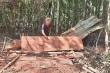 Khởi tố vụ phá rừng tan hoang tại Gia Lai