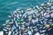 Video: Hà Nội thải 80 tấn rác thải nhựa mỗi ngày
