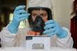 Ngoài Nga, Bộ Y tế còn đăng ký mua vaccine phòng COVID-19 của Anh