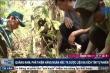 Cận cảnh hàng ngàn hecta ba kích tím vừa được phát hiện ở Quảng Nam