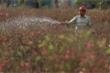 Hoa đào nở sớm, nông dân Hà Nội lo mất Tết