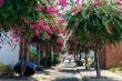 Lạc bước trên đường hoa giấy đẹp nhất Nha Trang