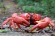 Video: Cách bầy kiến 'hạ gục' con mồi và ăn thịt hết con cua