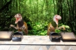 Lạc vào kỷ Jura với khách sạn được phục vụ bởi toàn… khủng long
