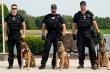 Video: Tận mục quá trình huấn luyện đội cảnh khuyển tinh nhuệ của Mật vụ Mỹ