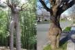 Loạt cây cối có hình dáng khiến người nhìn từ 'đỏ mặt' đến cười không ngớt