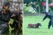 Chuyện về nữ cảnh sát duy nhất ở Việt Nam huấn luyện chó nghiệp vụ
