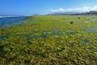 Video: Chiêm ngưỡng bãi rêu xanh tuyệt đẹp ở Ninh Thuận
