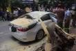 Video: Cây phượng đổ đè trúng ô tô đỗ trên phố cổ Hà Nội