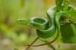 Nhận biết những loài rắn độc ở Việt Nam thế nào?