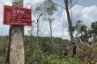 Hàng loạt chủ rừng ở Đắk Nông kê khai tăng diện tích để hưởng hàng tỷ đồng