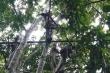 Bộ tộc ăn thịt người, sống trên cây, không giao du với thế giới bên ngoài gần 2.000 năm