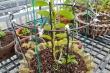 Giao dịch lan đột biến gần 300 tỷ đồng ở Quảng Ninh: Chủ vườn lên tiếng