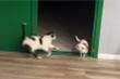 Chú chó 'hét toáng' khi bị mèo hù dọa
