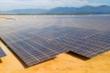 Nhiều sai phạm trong cấp phép dự án điện mặt trời ở Ninh Thuận