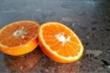 Hạt cam có thể ngăn ngừa ung thư và tăng cường hệ miễn dịch