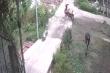 Clip: Màn trộm gà 'đổi trắng thay đen' trong phút chốc
