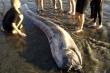 Cá rồng biển có thực sự là nhà tiên tri dự đoán được động đất, sóng thần?