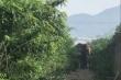 Cận cảnh hiện trường voi hung hãn húc chết người tại Đắk Lắk
