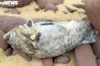 Công an Nghệ An điều tra nguyên nhân cá chết hàng loạt ở biển Nghi Thiết