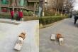 Clip: Chú chó lướt ván siêu đỉnh