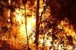 Đi chữa cháy rừng ở Nghệ An, một phụ nữ chết ngạt
