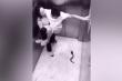 Clip: Chàng trai nhảy lên đu cổ bạn gái khi gặp rắn giả
